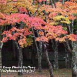 函館 笹流ダム公園 秋 紅葉