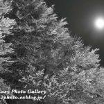 雪 渡島 月夜