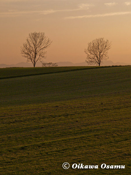 夕景2本の木