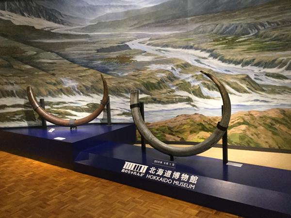 北海道博物館 2016 展示物