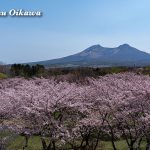 平成31年 2019年 北海道 森町 オニウシ公演 桜 駒ケ岳